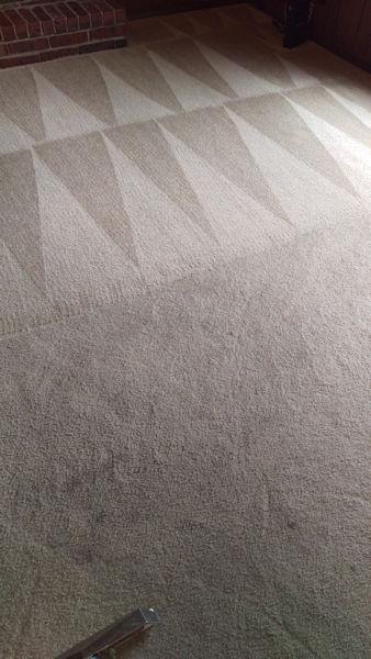 Carpet Cleaner | Episode 513 | Complete Carpet