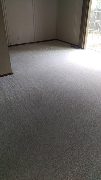 Carpet Cleaner | Episode 519 | Complete Carpet