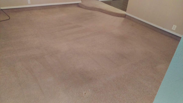 Carpet Cleaner | Episode 532 | Complete Carpet